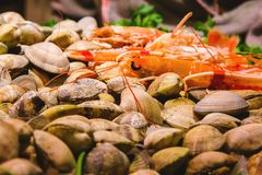 Seafood on ice at the fish market in Barcelona Spain royalty free stock photography