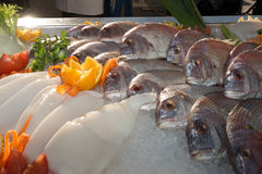 Seafood on ice at the fish market, bream and squid Stock Photography