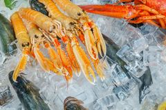 Seafood on ice at the fish market. Color image - Seafood on ice at the fish market Stock Images