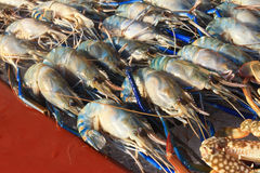 Seafood on ice at the fish market Stock Photography