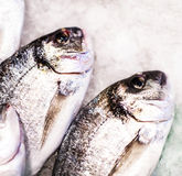 Seafood on ice at the fish market. Dorado fish close up on whi Royalty Free Stock Photography