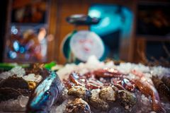 Fresh seafood on ice at the fish market. Seafood on ice at the fish market Royalty Free Stock Image