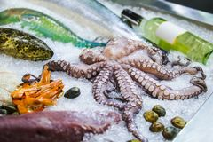 Seafood on ice at the fish market, marine fish, octopus, wine.  Stock Image