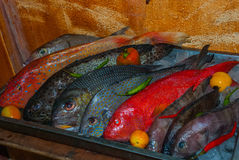 Seafood on ice at the fish market. Boracay, Philippines Royalty Free Stock Image