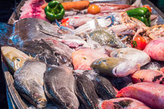 Seafood on ice at the fish market. In Thailand Royalty Free Stock Image