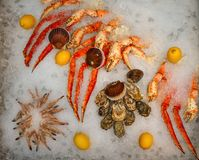 Seafood on ice at the fish market. Tray with a lot of type of seafood Stock Image