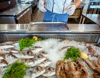 Seafood on ice and human hands Stock Photos