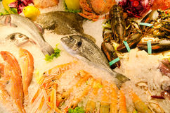 Seafood on ice. A lot of different seafood on ice Stock Images