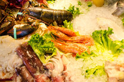 Seafood on ice. A lot of different seafood on ice Stock Photography
