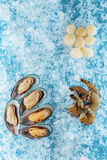 Seafood on ice. Mussels, scallops, shrimp Stock Photos