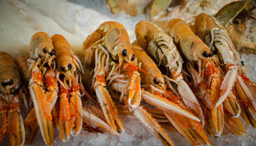 Seafood on ice. Pile of scampi (langoustines) in  Borough Market, London Royalty Free Stock Images