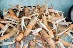 Seafood on ice at the sea market Royalty Free Stock Photos