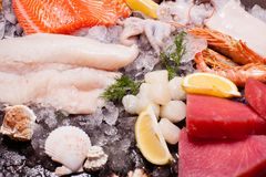 Seafood on the ice. Top view on the brown stone background Royalty Free Stock Images