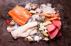Seafood on the ice. Top view on the brown stone background Stock Images