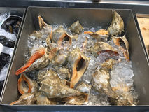 Seafood with ice selling at supermarket. Seafood at refrigerator selling at  supermarket, USA Royalty Free Stock Photography