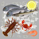 Seafood on ice stock illustration