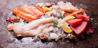 Seafood on the ice. Top view on the brown stone background Stock Photography