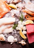 Seafood on the ice. Top view on the brown stone background Royalty Free Stock Photos