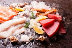 Seafood on the ice. Top view on the brown stone background Royalty Free Stock Photography
