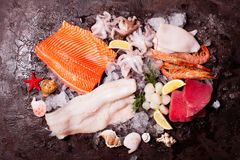 Seafood on the ice. Top view on the brown stone background Stock Photos