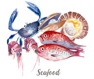 Seafood illustration. Hand drawn watercolor on white background. Royalty Free Stock Image