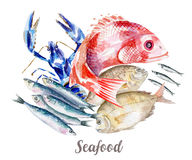 Seafood illustration. Hand drawn watercolor on white background. Royalty Free Stock Photography