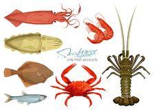 Free Seafood In Cartoon Style. Icons. Vector Illustrations. Set Squid, Cuttlefish, Crab, Shrimp, Spiny Lobster, Flounder Fish Stock Images - 117882174