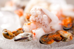Seafood ingredients. Different types of seafood ingredients Royalty Free Stock Images