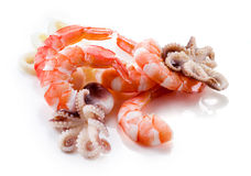 Seafood isolated. Shrimps, octopus; and squid. Stock Image