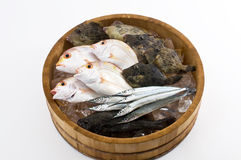 Seafood from Japan Royalty Free Stock Photography