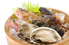 Seafood from Japan. Seafood that you take in the sea of Japan Stock Photography