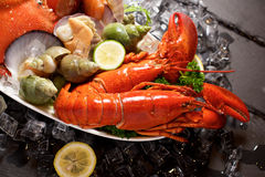 Seafood lobster plater on slate Stock Photos