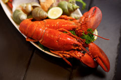 Seafood lobster plater on slate Royalty Free Stock Photo