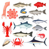 Seafood luxury collection. Seafood collection. Fish and shellfish delicious menu, market from oceans around the world, premium restaurant cuisine. Vector flat Stock Images