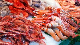 Seafood on market Stock Images