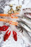 Seafood in market over ice. Seabass, mackerel, hake fish, nephrops, crabs and clams seafood Royalty Free Stock Image