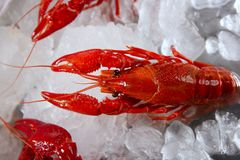 Seafood in market over ice. River vivid red color crabs over market ice Royalty Free Stock Image