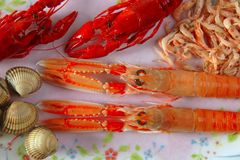 Seafood in market over ice. Raw seafood on the plate, nephrops, crabs, clams and shrimps Stock Image
