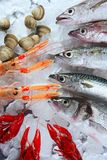 Seafood in market over ice. Seabass, mackerel, hake fish, nephrops, crabs and clams seafood Stock Images