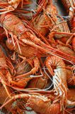 Seafood in market over ice Stock Photos