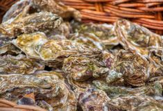 Seafood market oyster shell mussel luxury delicate fresh gourmet royalty free stock images