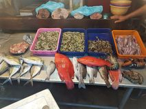 Seafood market for sale, shrimp and other fresh fish royalty free stock images