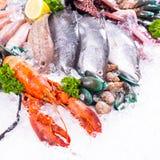Seafood market sea raw material Stock Photos