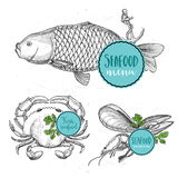 Seafood menu and badges design elements. Stock Photo