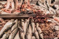 Seafood on Mercado Central market in Santiago, Chile. Fresh fish and seafood on Mercado Central market in the center of Santiago, Chile stock photos
