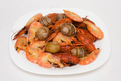 Seafood mix Royalty Free Stock Photo