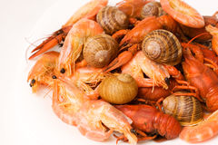Seafood mix Royalty Free Stock Images