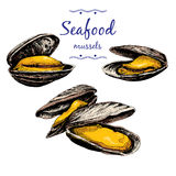 Seafood. Mussels. Stock Photos