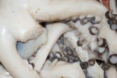 Seafood - Octopus - Closeup Royalty Free Stock Image
