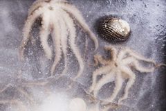 Seafood. Octopus and seashells frozen in ice. Culinary mediterranean eating Stock Images
